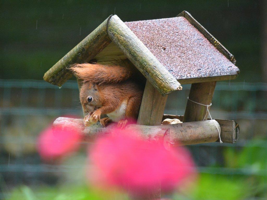 Good guests in the garden